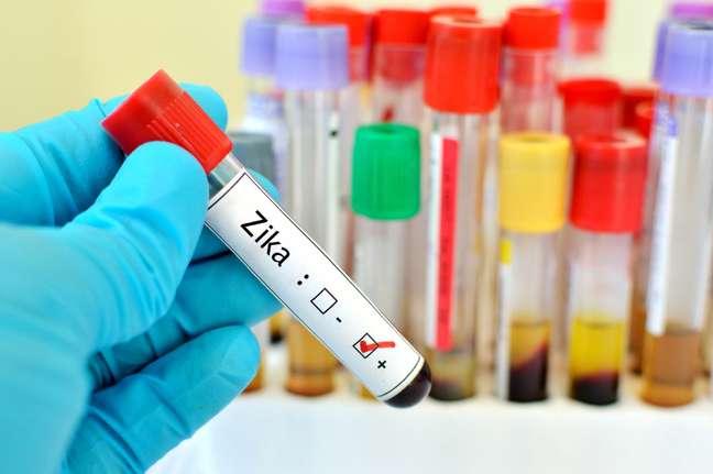 Quatro dias após a infecção, o Zica brasileiro causou uma maior que o africano e praticamente extinguiu as células em proliferação.
