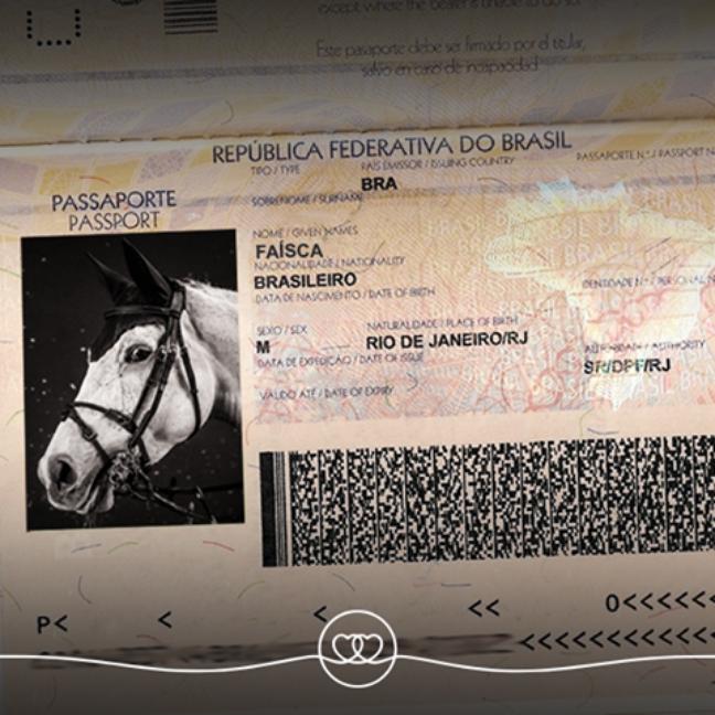 Cavalos olímpicos possuem documentação especial para viajar. Na imagem, tanto o cavalo quanto o passaporte são fictícios