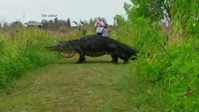 Com base no vídeo, especialistas em jacarés selvagens estimaram o tamanho do animal: 4,5 metros de comprimento e mais de 360 kg