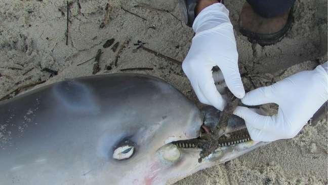Biólogo diz que não é incomum animais morrerem por ingerir ou se enroscar em lixo