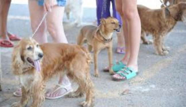 Os cães são os bichos preferidos dos brasileiros que criam animais em casa