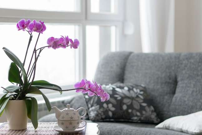 O lilás equilibra as nossas energias e as vibrações do ambiente à nossa volta.