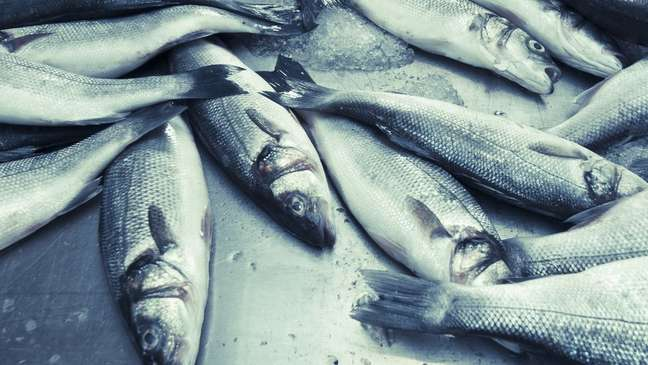 Grande quantidade de gelo em pescados também pode enganar consumidor