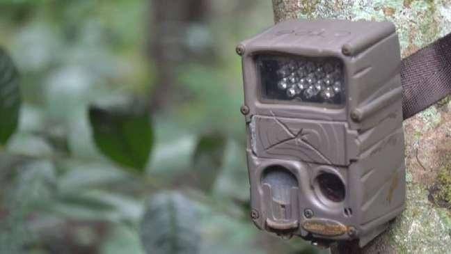 Pesquisadores amarraram câmaras na árvore para monitorar espécies em sete áreas