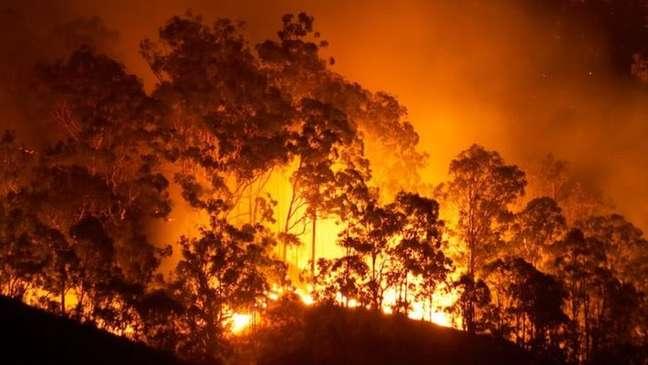 Pesquisadores apontam que aves alastram incêndios para capturar suas presas com mais facilidade
