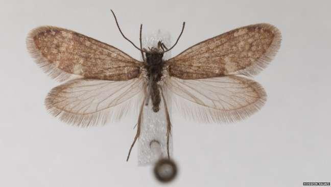 Mariposa viva: DNA delas e das borboletas são as principais bases para pesquisas, uma vez que evidências fósseis são raras | Foto: Hossein Rajaei