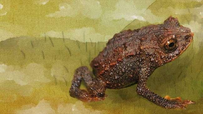 Sapo que caminha como lagarto também foi achado no Pico da Neblina