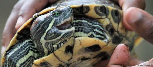 Pesquisadores do Ifaw relatam ter listado à venda mais de 11 mil espécimes ameaçados, no valor de 3,3 milhões de euros