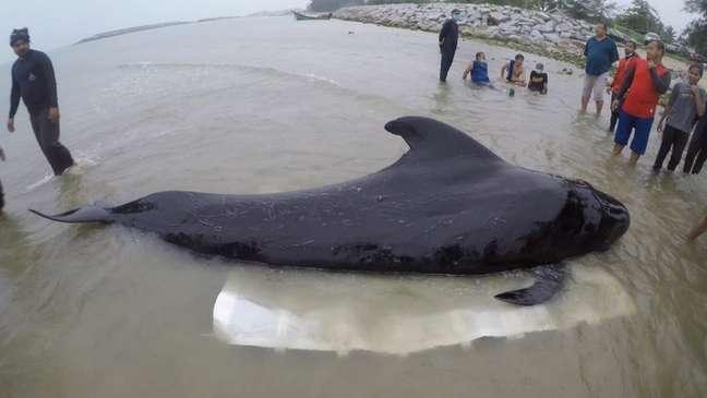 Animal ingeriu cerca de oito quilos de plástico - depois, não conseguiu mais se alimentar
