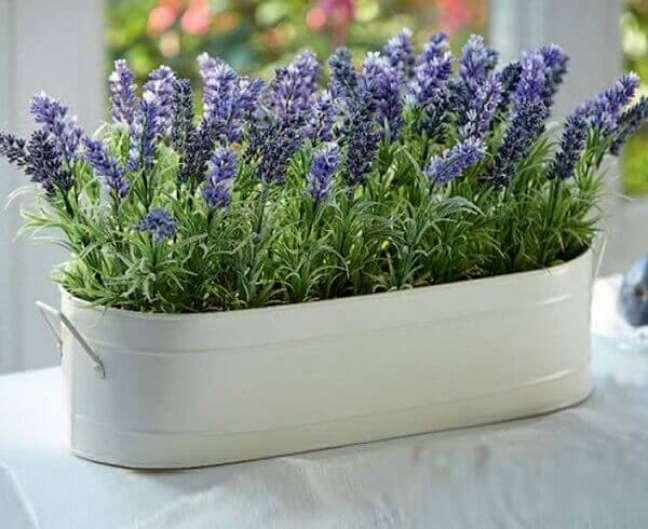 20 – Plantas ornamentais de sol como a lavanda gostam de ser cultivadas em solo arenoso.