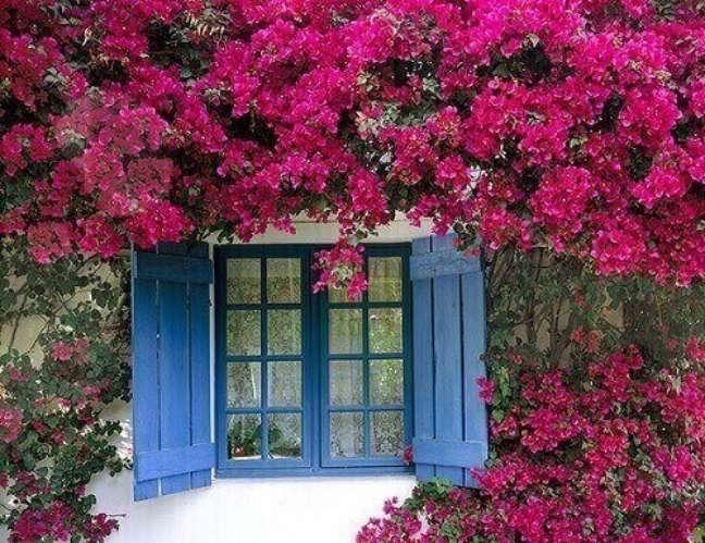 17 – As plantas ornamentais de sol como a primavera ficam lindas sobre muros e cercas.