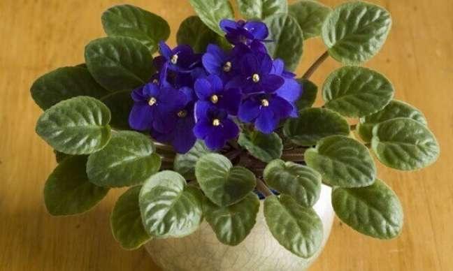 22 – As violetas são flores delicadas que apreciam a sombra.