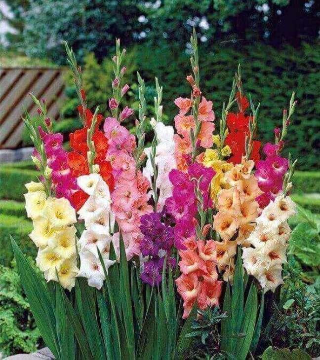 3 – A Palma de Santa Rita são plantas ornamentais e apresenta flores brancas e coloridas.