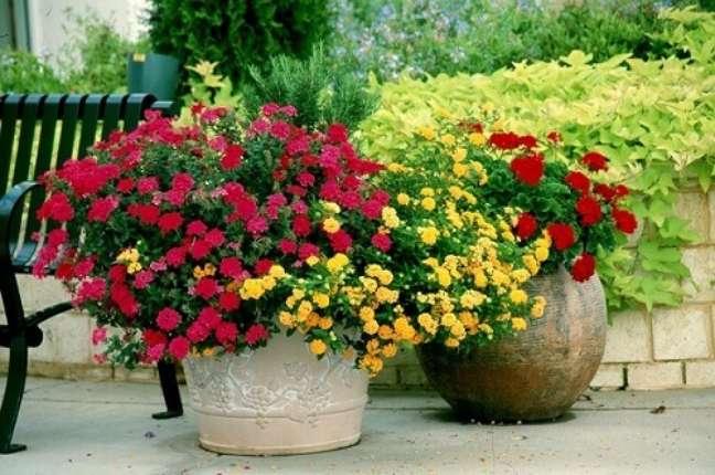 30 – Os Gerânios são plantas ornamentais muito utilizadas para áreas externas.
