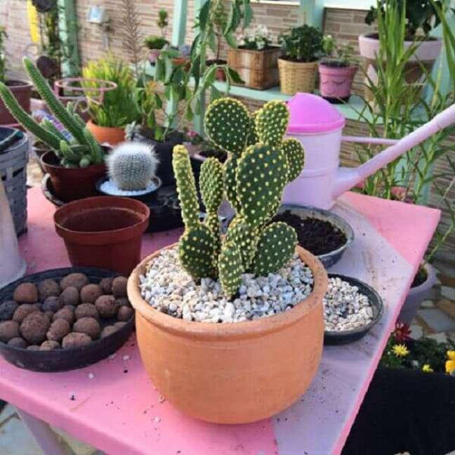 28- Os vasos de cactos são muito utilizados para decorar jardins e residências.