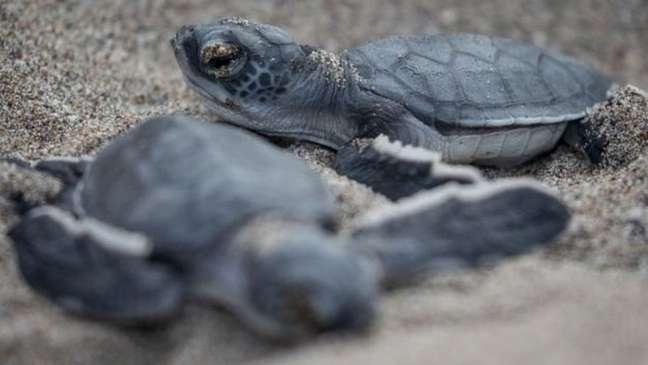 Pescadores tentaram tirar as tartarugas enroscadas na rede, mas todas morreram