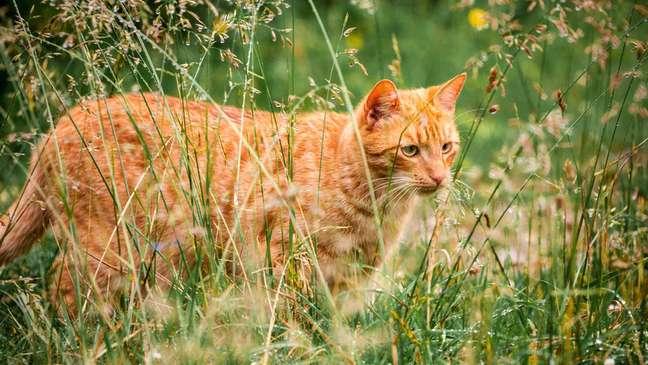 A cidade de Omaui quer proteger a fauna local dos gatos que andam soltos