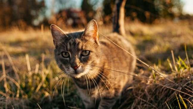 Gatos causaram extinsão de diversas espécies nativas na Austrália e na Nova Zelândia