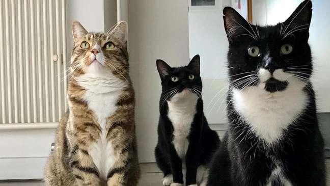 Marjan Debevere diz que em sua experiência não há dois gatos que ronronam da mesma maneira (Crédito: Marjan Debevere)