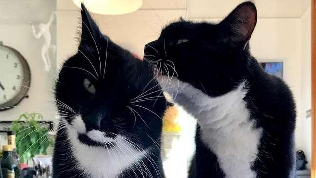 Gatos muitas vezes ronronam quando estão cuidando um do outro (Crédito: Marjan Debevere)