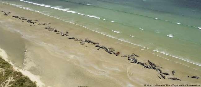 Área remota, a consequente falta de funcionários, e a deteriorada condição das baleias obrigaram o sacrifício dos animais