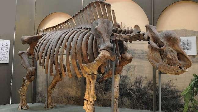 Esqueleto do mamífero no Museu de Stavropol