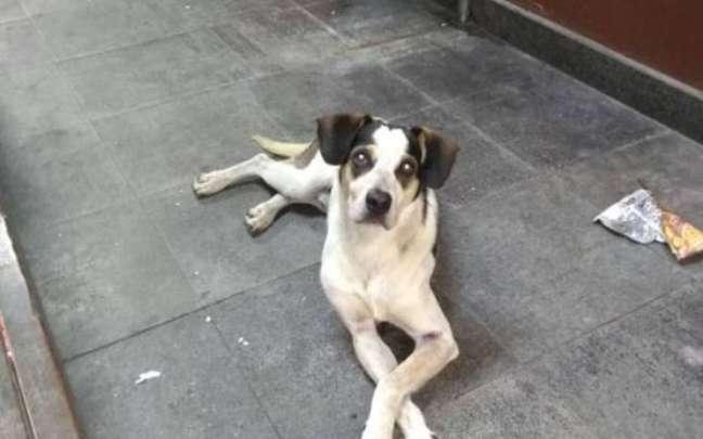 O cachorro que vivia solto na loja do Carrefour teria sido envenenado e espancado até a morte por um segurança