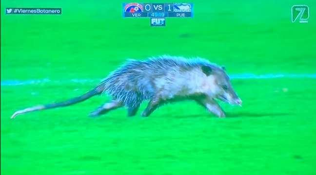 Gambá foi a estrela da noite no Campeonato Mexicano (Foto: Reprodução/Twitter)