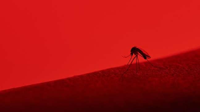 O Aedes pode estar transmitindo também o mayaro? Cientistas brasileiros estão atrás desta resposta