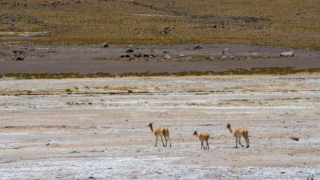 O deserto de Atacama é o mais seco do mundo
