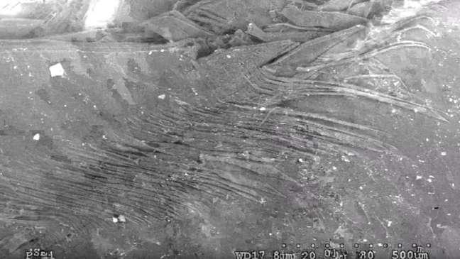 Fibras sobrepostas aumentam a resistência das escamas