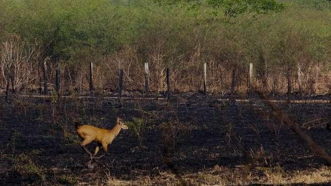 Pantanal tem sido atingido por fortes incêndios neste ano