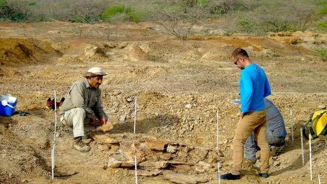 Um dos fósseis foi encontrado pelos paleontologistas na região de Urumaco, na Venezuela