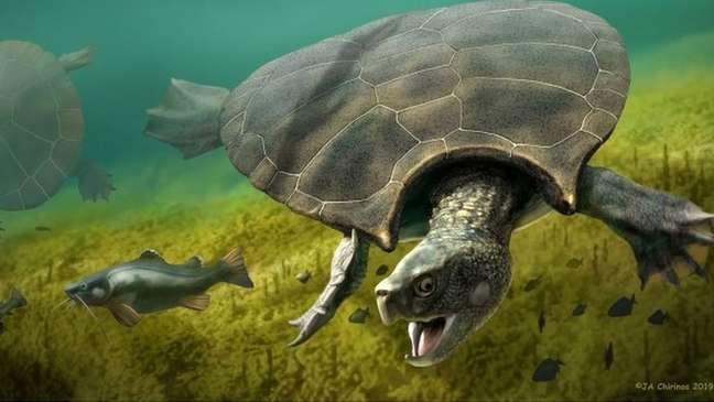 A espécie Stupendemys geographicus tinha aproximadamente o tamanho de um carro
