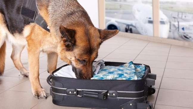 Treinar cachorros para encontrar explosivos é uma tarefa que exige tempo e dinheiro
