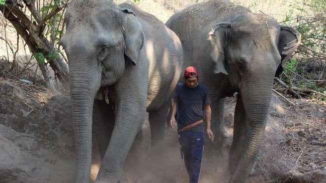 Elefantes estão entre as principais atrações turísticas do país asiático