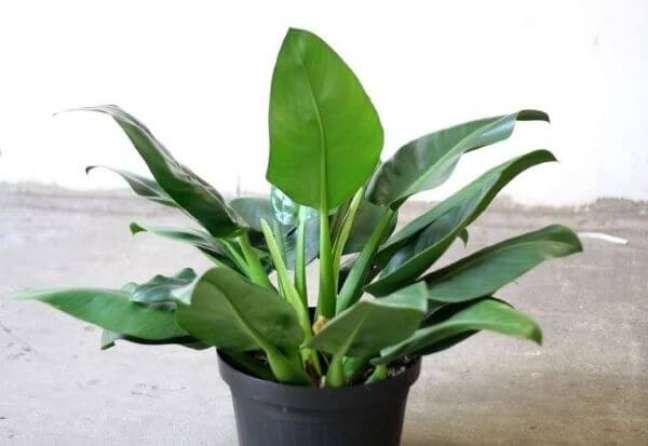 33. Vaso de pacová flor – Via: Toca das Plantas