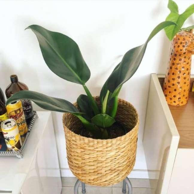 41. Escolha lindos vasos para suas plantas – via: Pinterest