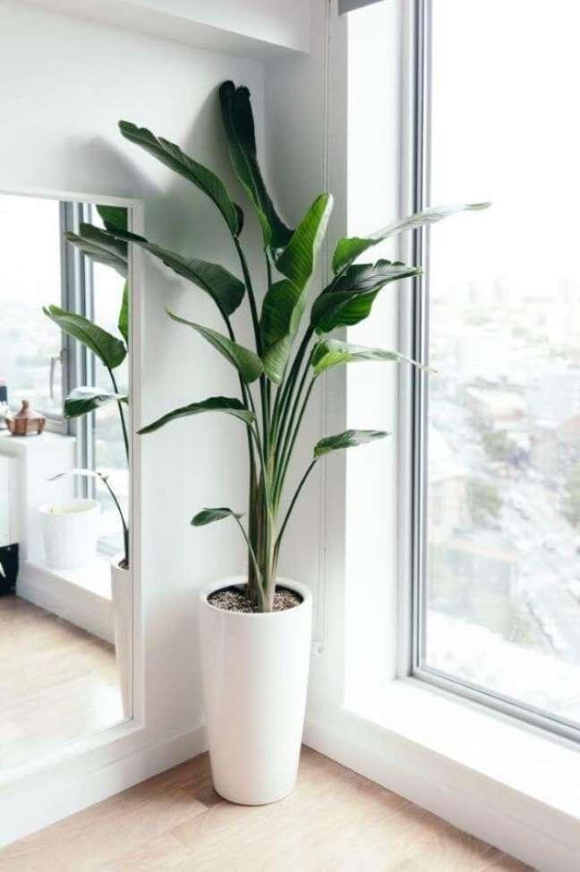 5. Pacová gigante na decoração de casa – Via: Pinterest