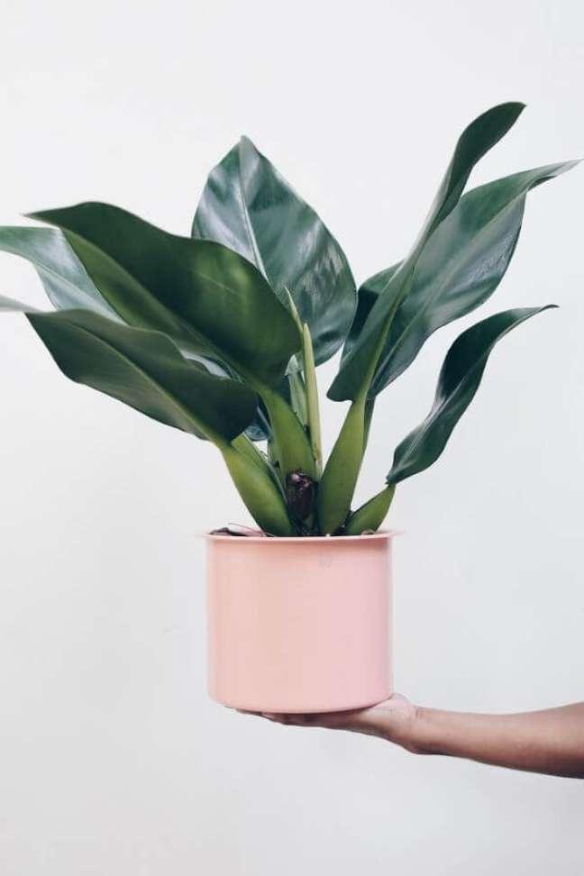 6. Pacová em vaso cor de rosa – Via: Pinterest