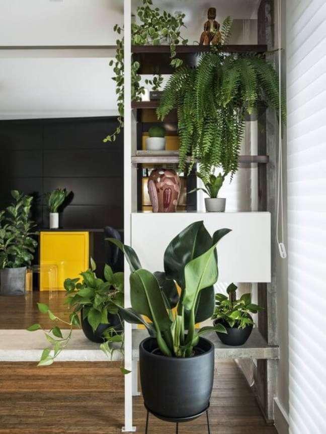 3. Pacová planta na sala com estante de plantas – Via: Gazeta do Povo
