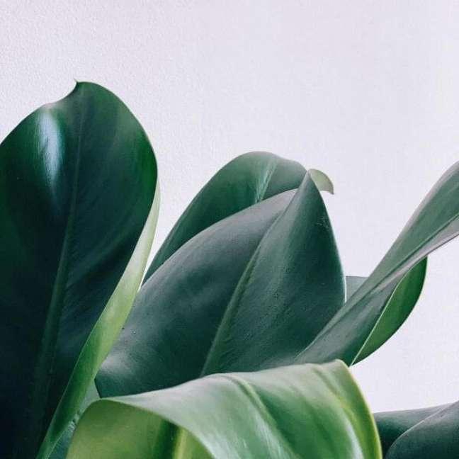 15. Planta de pacová na decoração de casa – Via: Pinterest