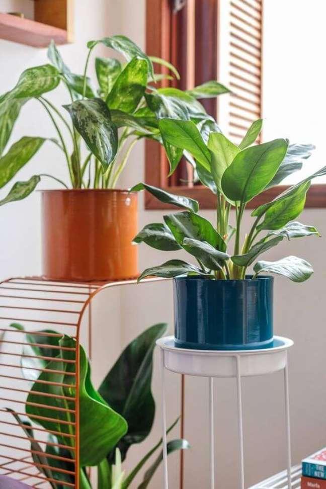 21. Use outras plantas com o pacová para decorar sua casa – Via: Selvvva