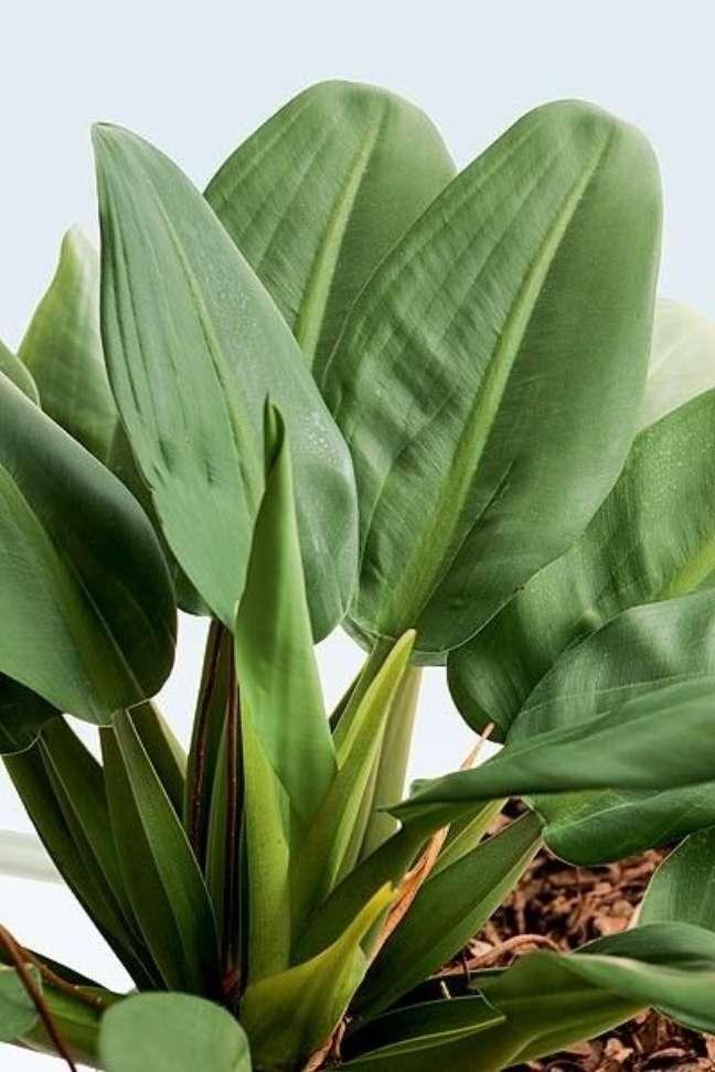 23. Planta pacová para decoração de casa moderna – Via: Pinterest
