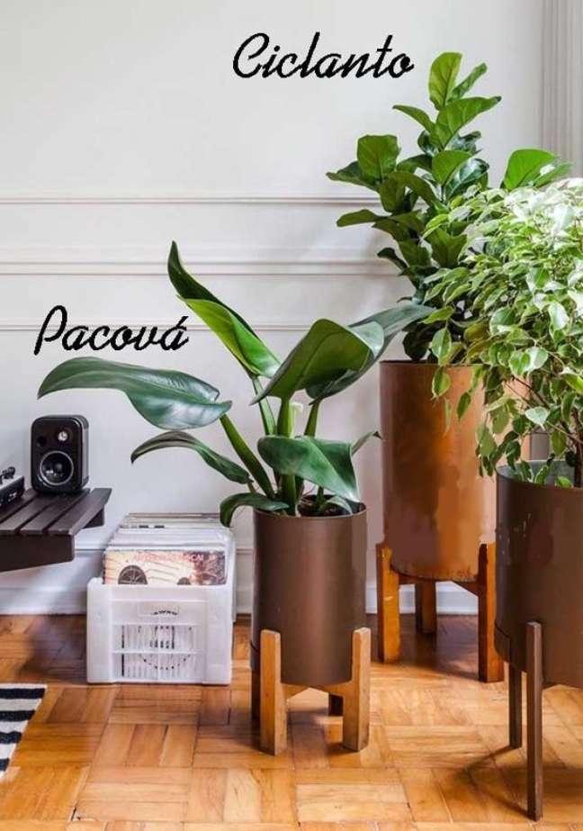25. Planta pacová e ciclanto na decoração de casa simples – Via: Pinterest