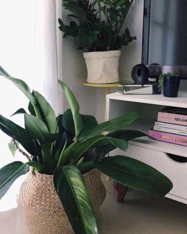 26. Vaso de planta na sala de estar – Via: Pinterest