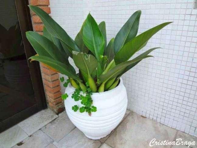 28. Escolha um belo vaso para colocar suas plantas – Via: Cristina Braga