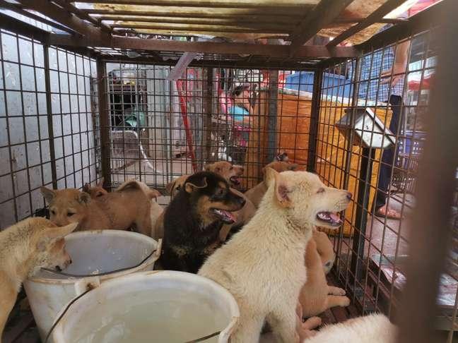 Filhotes de cachorro em gaiola em mercado de Yulin 22/06/2020 Humane Society International/Divulgação via REUTERS
