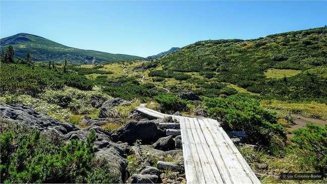Tábuas de madeira protegem a flora alpina, além de demarcar o caminho