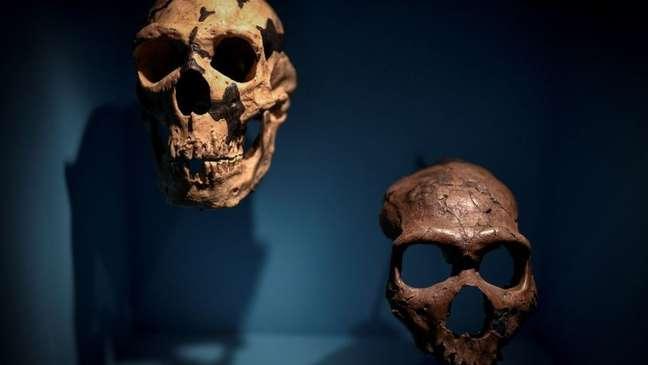Devemos várias doenças atuais à herança neandertal, mas também um sistema imunológico mais preparado para combater as infecções